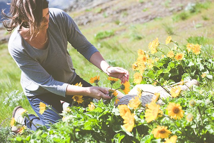 Harvesting balsam